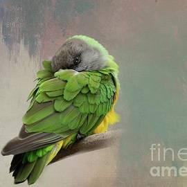 Senegal Parrot 2 by Eva Lechner