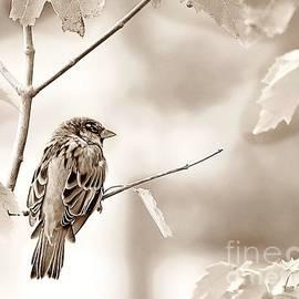Sepia Sparrow by Lori Pessin Lafargue