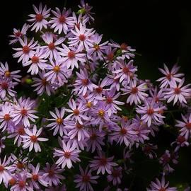 September Flowers  by Lori Frisch