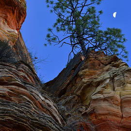 Setting Moon Over Zion by Stephen  Vecchiotti