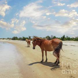 Shackleford Ponies by Kelley Freel-Ebner