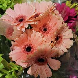 Shades of a pink gerbera daisy by Charlotte Gray