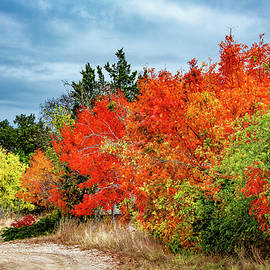 Shades of Fall in the Hill Country by Lynn Bauer