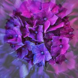 Shades of Purple by Jerry Abbott