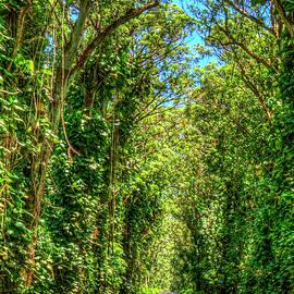 Shadows and Light 2 The Tree Tunnel South Shore Kauai Hawaii Art by Reid Callaway