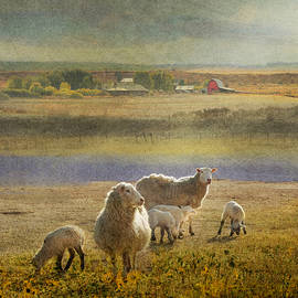 Sheep And Bucolic Farm by R christopher Vest