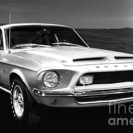 Shelby Cobra Mustang 1968 BW by Thomas Burtney