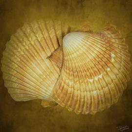 Shell Rainbow 15 by Dawn Currie
