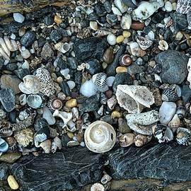 Shells - NSW - Australia 2 by Steven Ralser