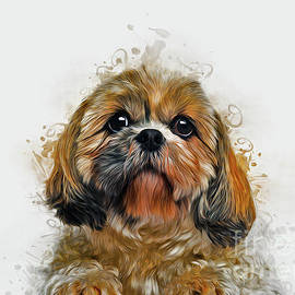 Shih Tzu Art by Ian Mitchell