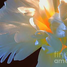 Shining White Tulip. by Alexander Vinogradov
