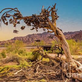 Shoe Tree  by Mitch Shindelbower