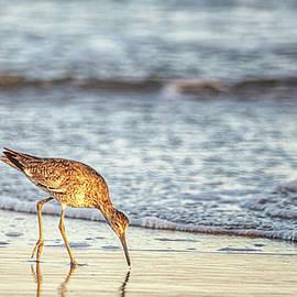 Shorebird on the Beach at Sunset - North Carolina Crystal Coast by Bob Decker