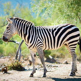 Showing Off My Stripes by Teresa Wilson