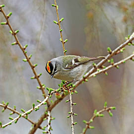 Showing Off The Orange Patch by Debbie Oppermann