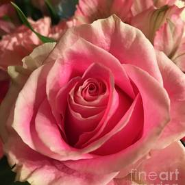 Showy Pink by Ann Brown