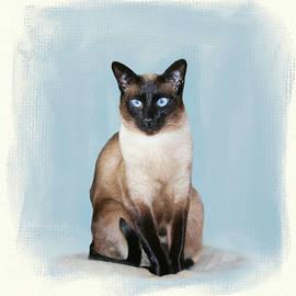 Siamese Portrait by Donna Kennedy