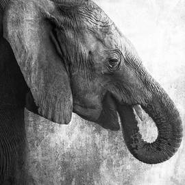 Side Profile of a Young Elephant bw by Belinda Greb