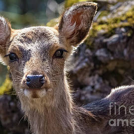 Sika deer portrait by Lyl Dil Creations