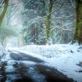 Silent Lane by Richard Downs