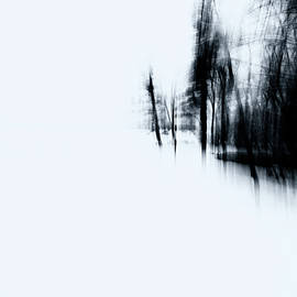 Silhouette of Trees by Renata Natale