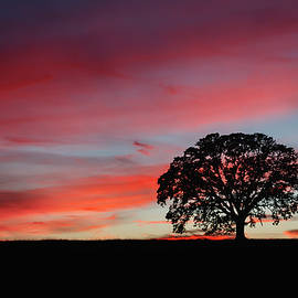 Silhouette Sunset by Gary Geddes