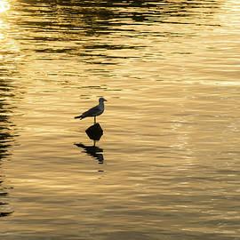 Silky Gold with Seagull by Georgia Mizuleva