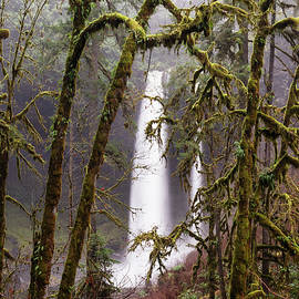 Silver Falls Oregon Mossy Trees by William Dunigan