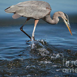 Silver Heron by Ivete Basso Photography