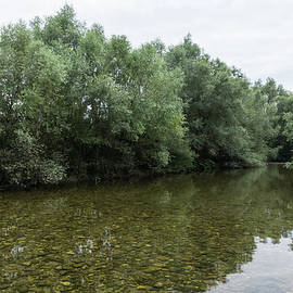 Silver Willows - Calm Clean River with a Gentle Current by Georgia Mizuleva