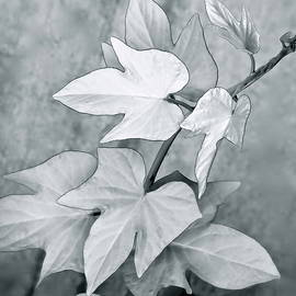 Silvery Leaves Square by Bonnie See