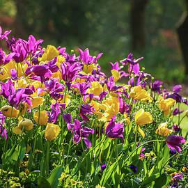 Simply Spring by Mary Ann Artz