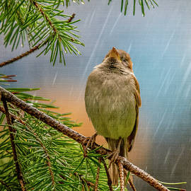 Singing In The Rain by Cathy Kovarik