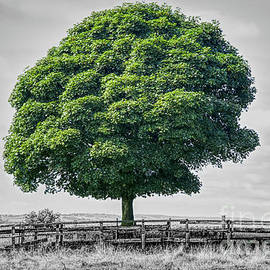 Single tree composite photograph by Pics By Tony