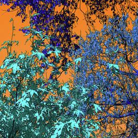 Sinset Leaves by Ian MacDonald