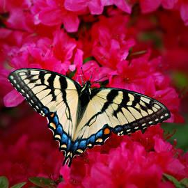Sipping Nectar by Marilyn DeBlock