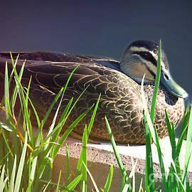 Sitting Duck by Trudee Hunter