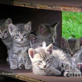 Six Kittens by Bruce Brandli