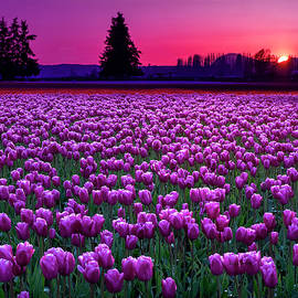 Skagit Valley at Sunset by Penny Lisowski