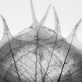 Skeleton  Nature by Paulo Viana