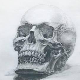 Skull Pencil Drawing  by Lavender Liu