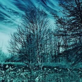 Sky Blue Woods by Jeremy Lyman
