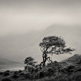 Skye Tree by Dave Bowman