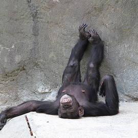 Sleeping Funny Monkey by Dianna Tatkow