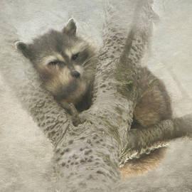 Sleepy Raccoon - painted by Marilyn Wilson