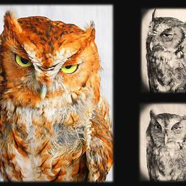 Sleepy Screech Owl Montage by Emmy Marie Vickers