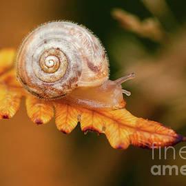 Small cute snail on golden fern leaf by Simon Bratt Photography LRPS