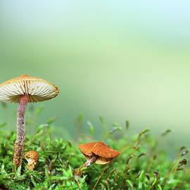Small Mushrooms in Minnesota by Alex Nikitsin