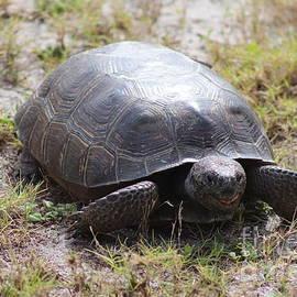 Smiling Turtle by Mesa Teresita