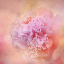 Smoky Camellia by Terry Davis